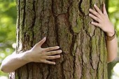 A fák gyógyító ereje – Öleld át a fát