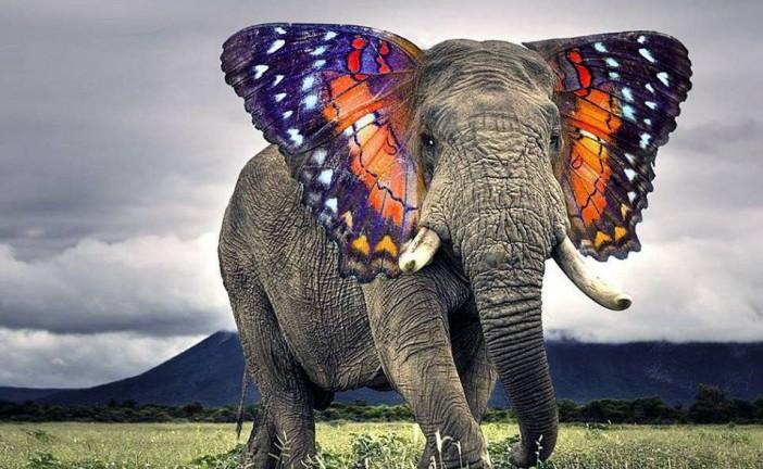 A négy vak és az elefánt története – tanítómese Istenkeresőknek